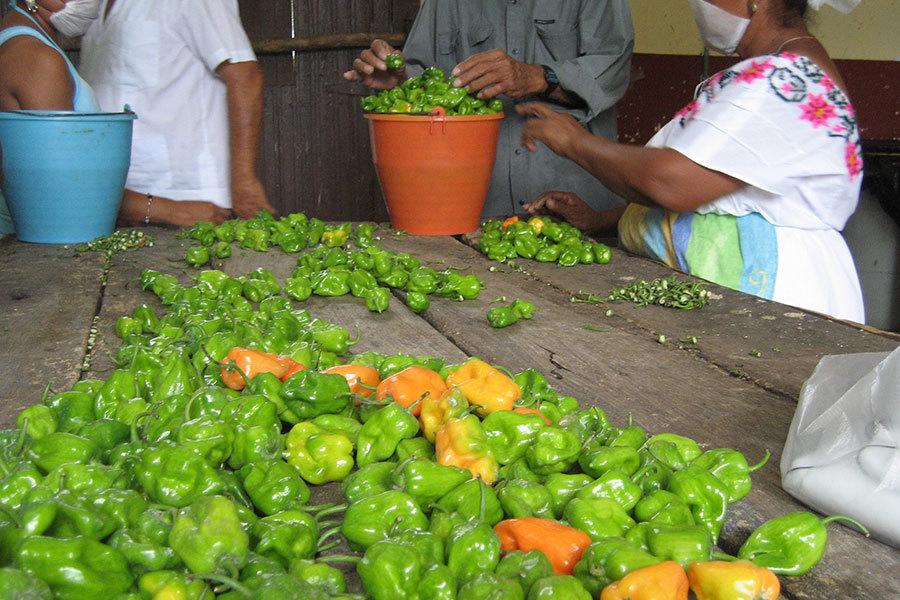 Chile Habanero - Saveurs et goûts: Yucatán