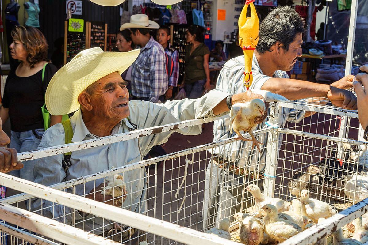 Tlacolula - Les Sri Lankais, la cannelle et Oaxaca