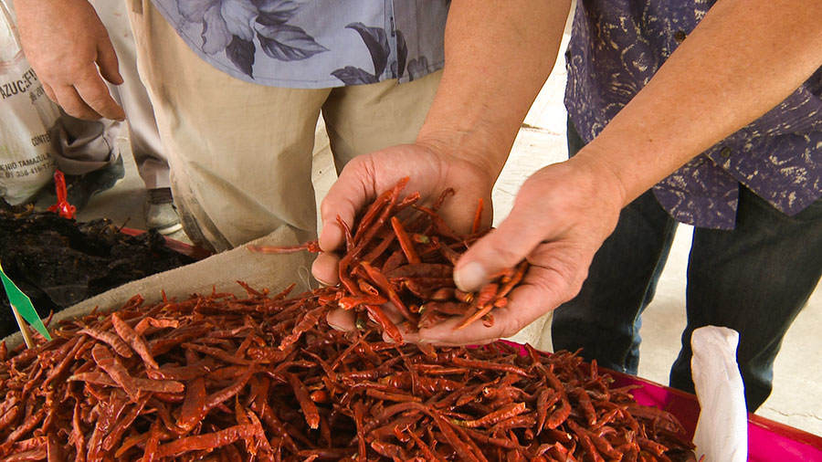 Chiles - Saveurs et goûts: Oaxaca
