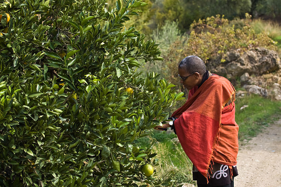 Saveurs et goûts: La Crète et la Provence