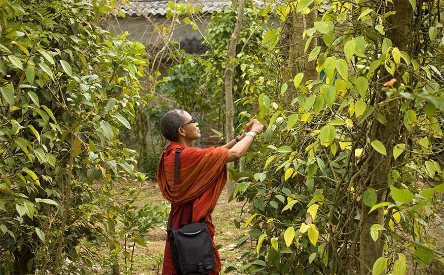 Ethné plantation de poivre - Saveurs et goûts: l'Inde du sud