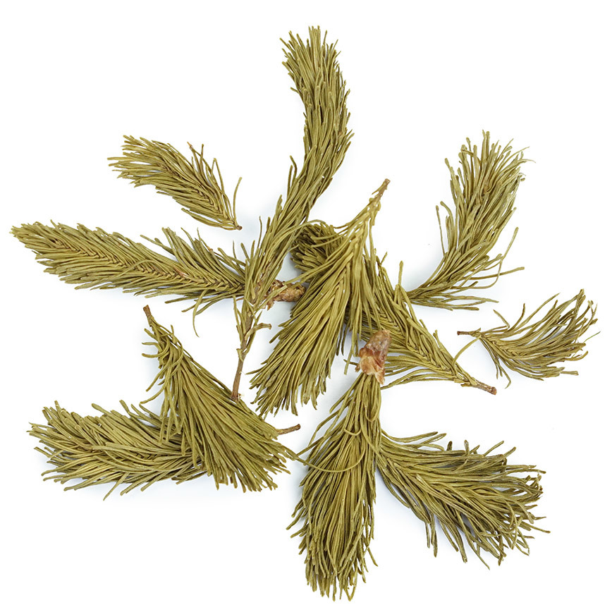 balsam-fir-tips