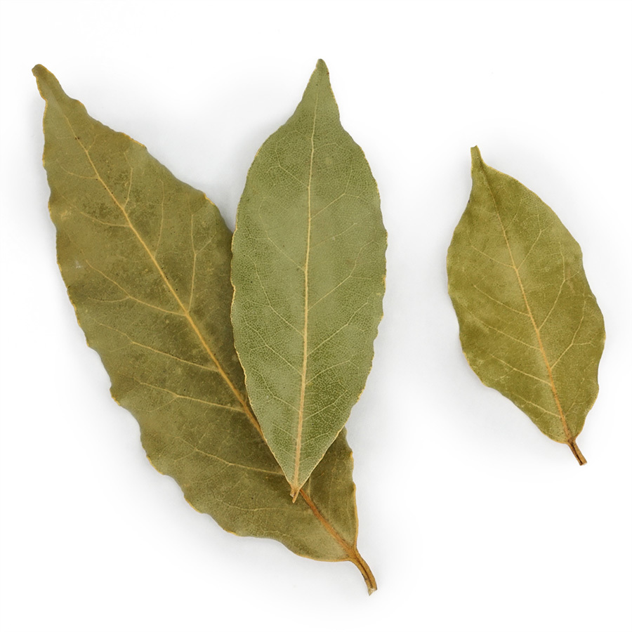 bay-leaf-daphnis-and-chloe
