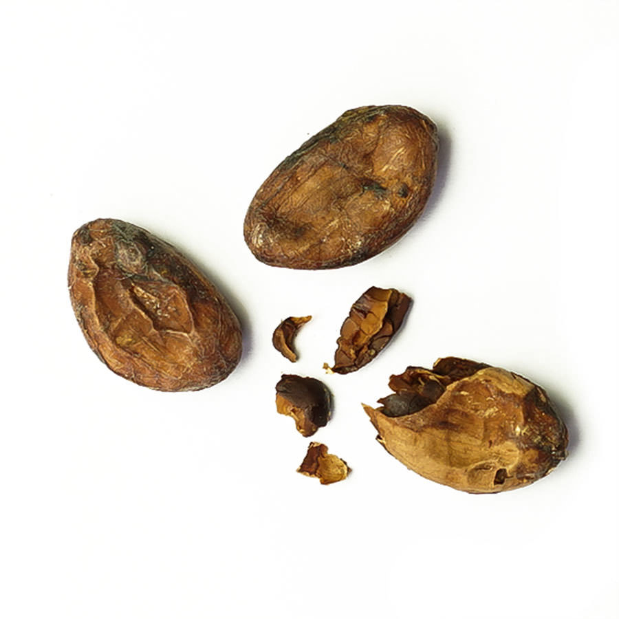 Fèves de cacao crues - Morropon