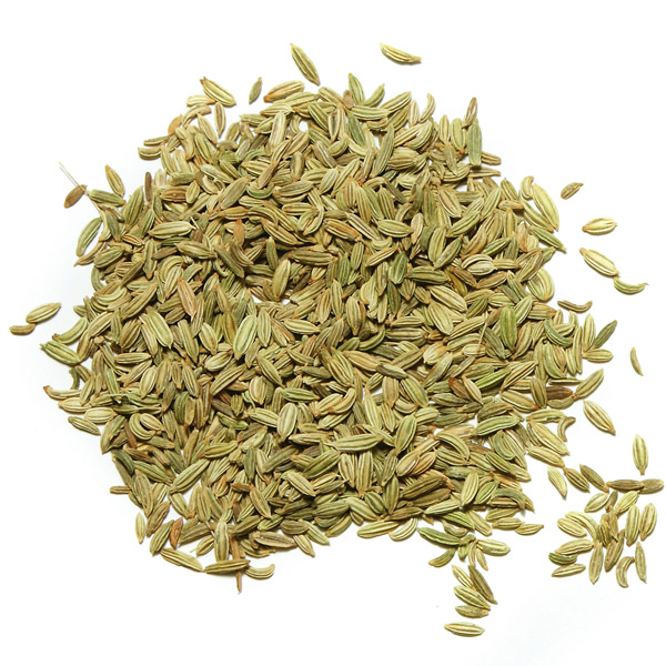 indian-fennel
